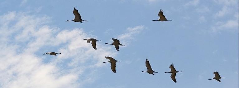 Годы летят как птицы