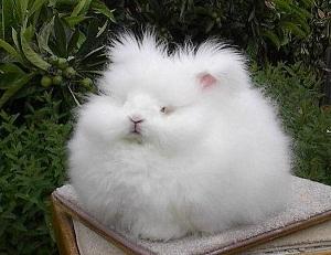 """Реальная историю из жизни:""""Кролик за 300 баксов"""""""